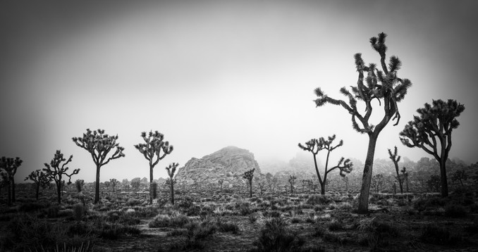 joshua Tree Forest and Hill