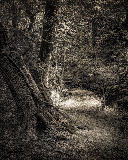 Forest Study #9