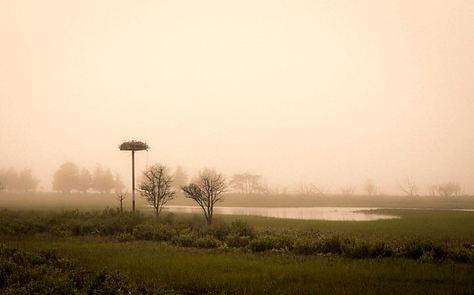 Osprey Nest in Fog