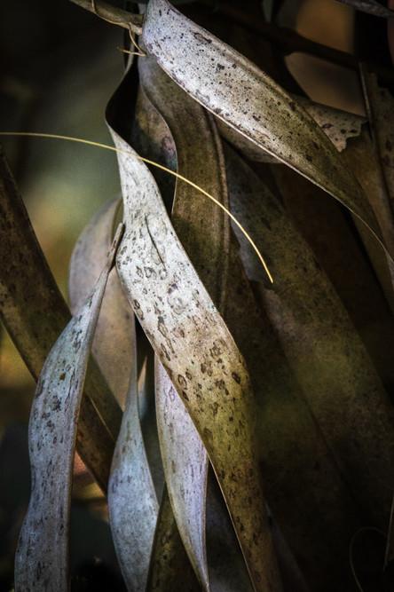 Palm Leaf Study #3