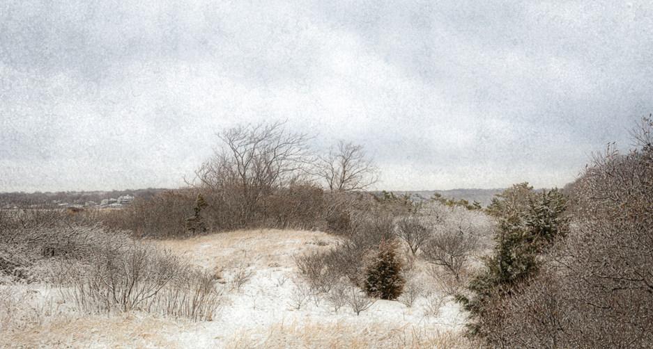 Sunken Meadow Dunes In Winter#1