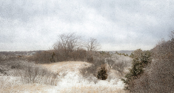 Sunken Meadow Dunes In Winter#1