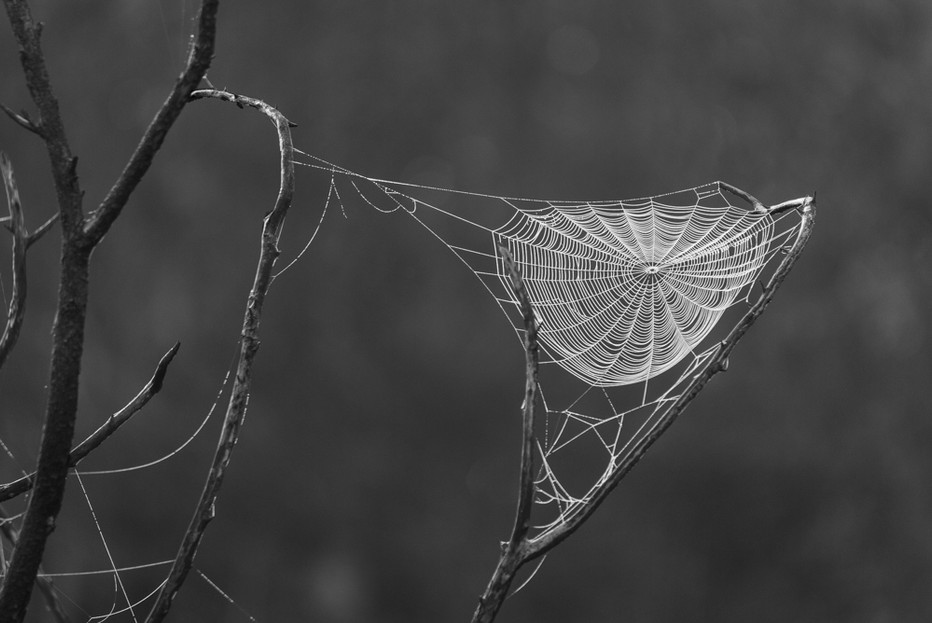 Spider Web, Sanibel