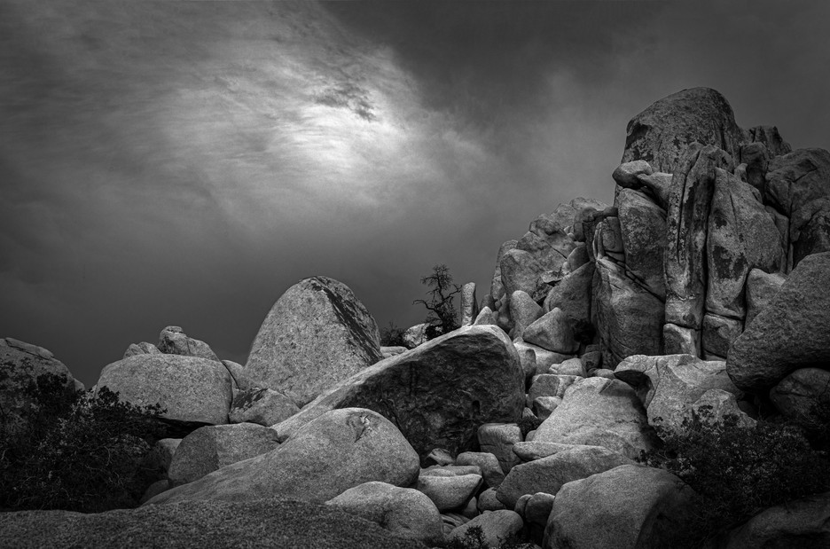 Tree With Boulders #2