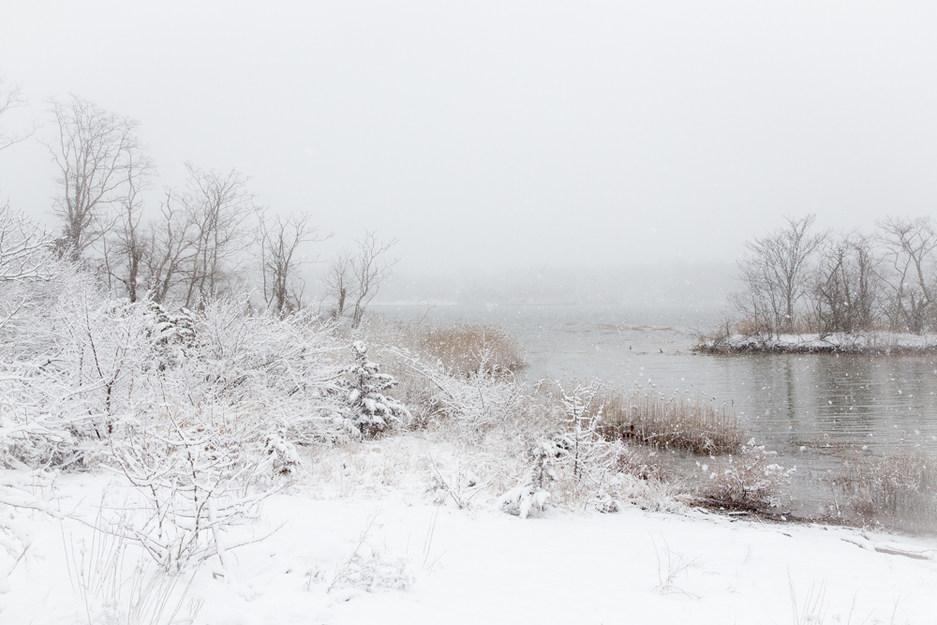 Along Shoreline Trail in Winter #1