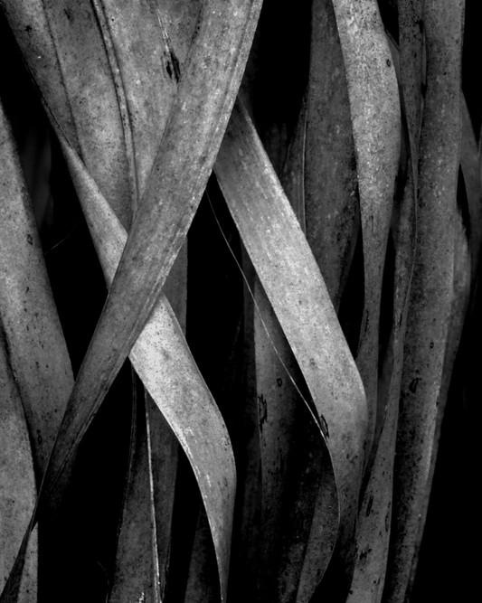 Palm Leaf Study #15