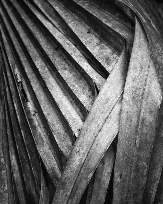 Palm Leaf Study #16