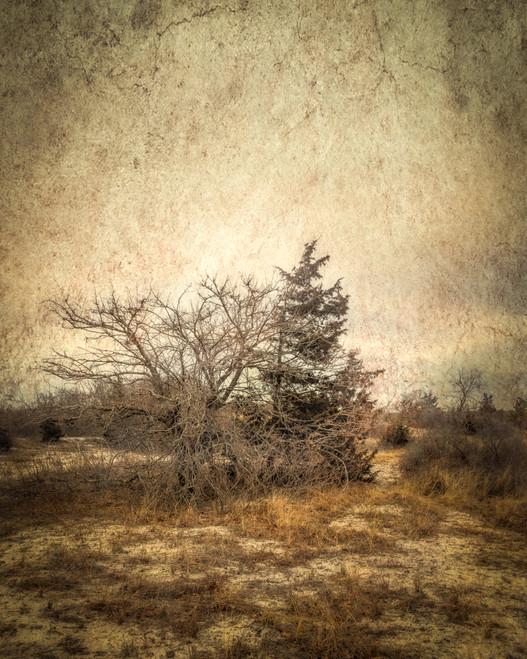 Tree on Dune #3