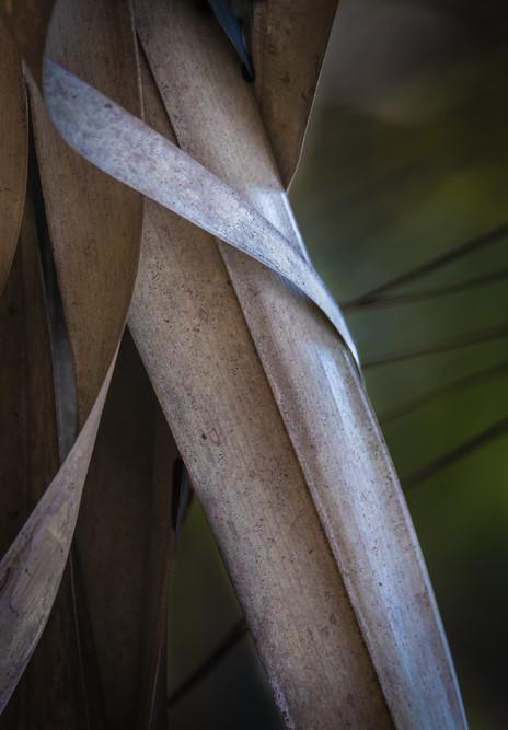 Palm Leaf Study #2