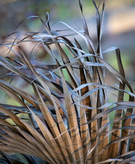 palm Leaf Study #7