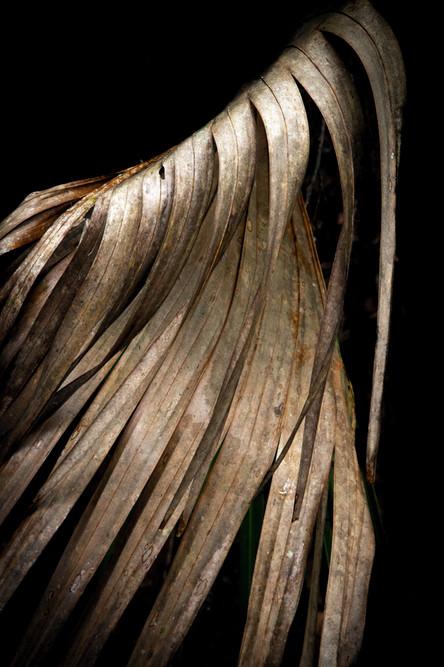 Palm Leaf Study #12