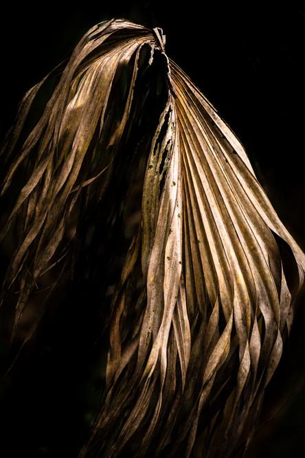 Palm Leaf Study #10