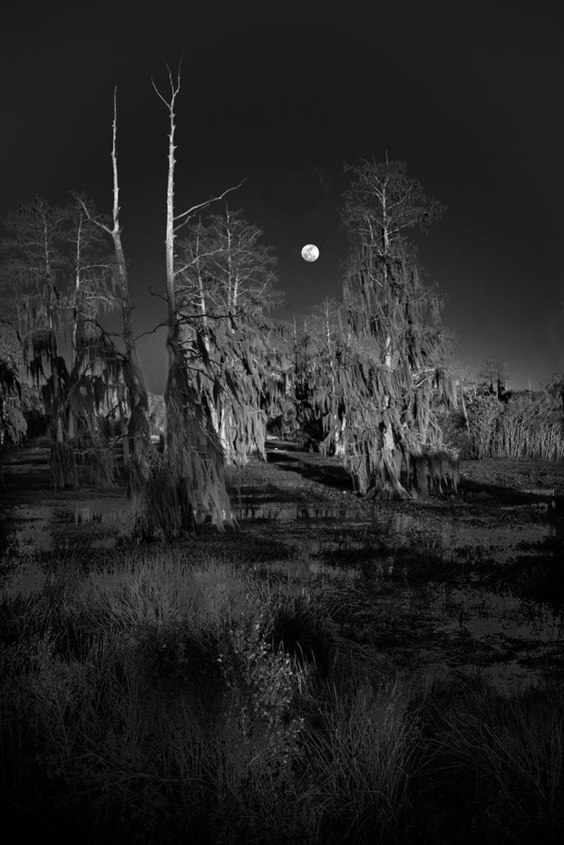 Moonrise Over Cypress Trees
