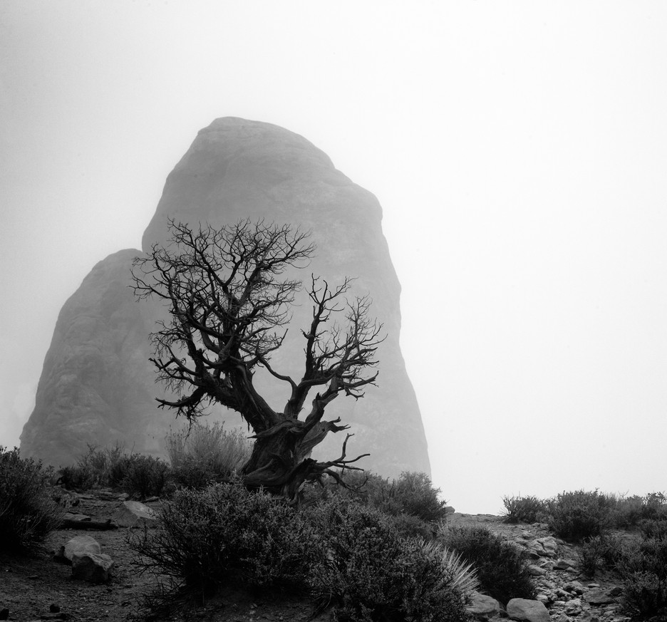 Tree Silhouetted Against Boulder