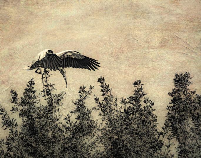 Woodstork Landing in Trees