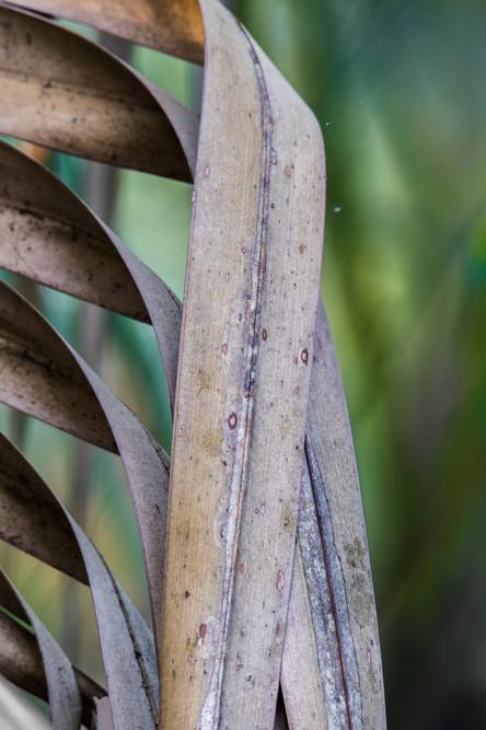 Palm Leaf Study #4