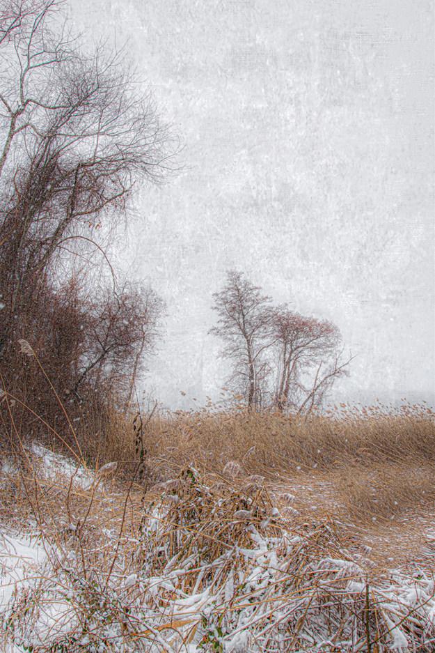 Along Shorline Drive in Winter