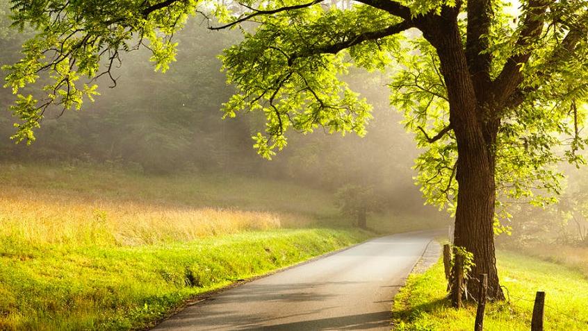 Chemin arbre nature