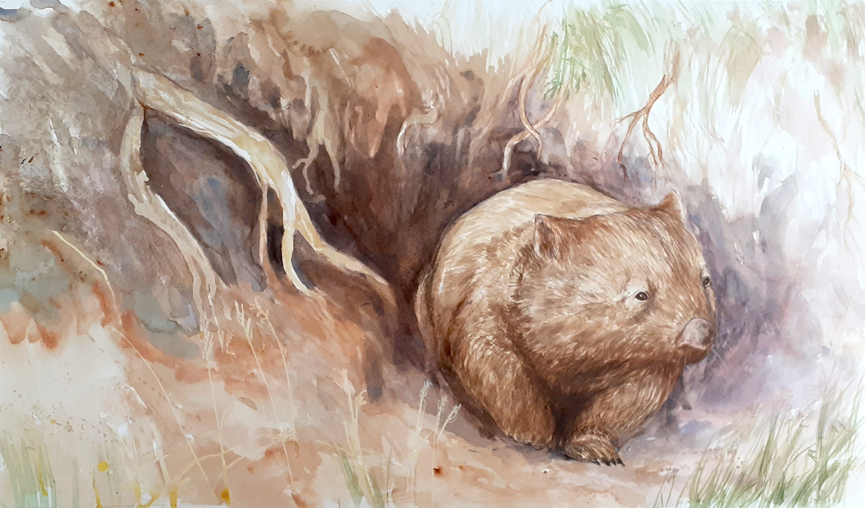 Wombat's day begins