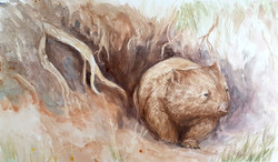 Wombat's day begins