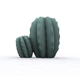 cactusGris.jpg