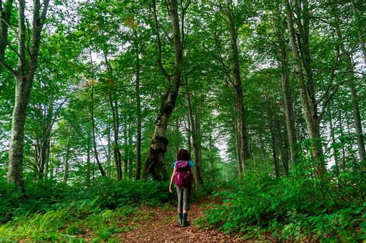 Hiking & fitness in Adjara, Georgia