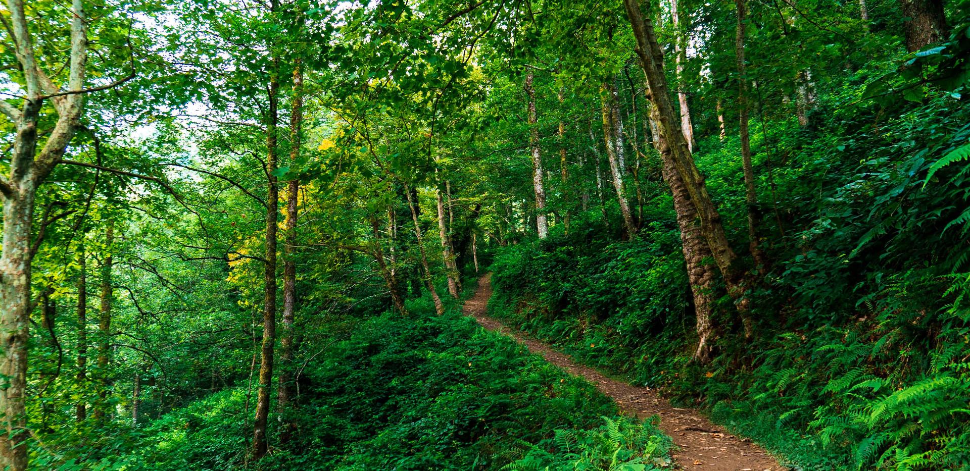 Hiking in Adjara, Georgia