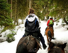 borjomi horseriding tour georgia winter
