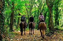 Horse riding tour Lagodekhi national par
