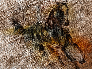 cavalos16.jpg
