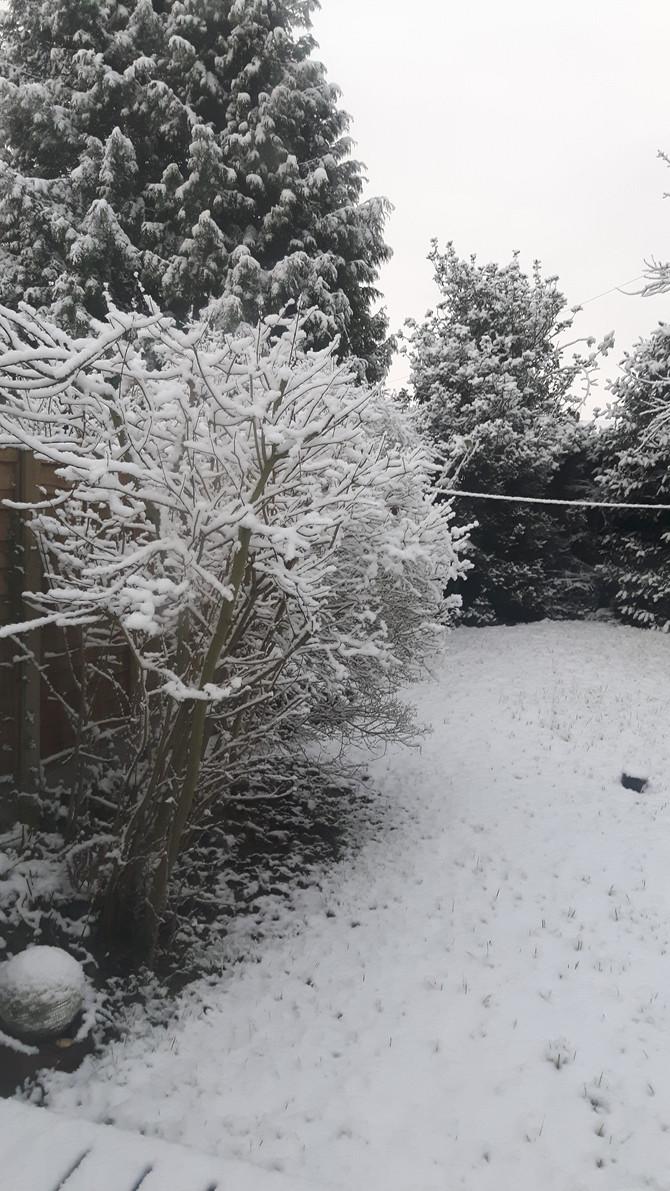 Backyard seasons: Snowflakes are kisses from heaven ~ anon
