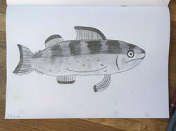 PP Mackerel Fish.JPG