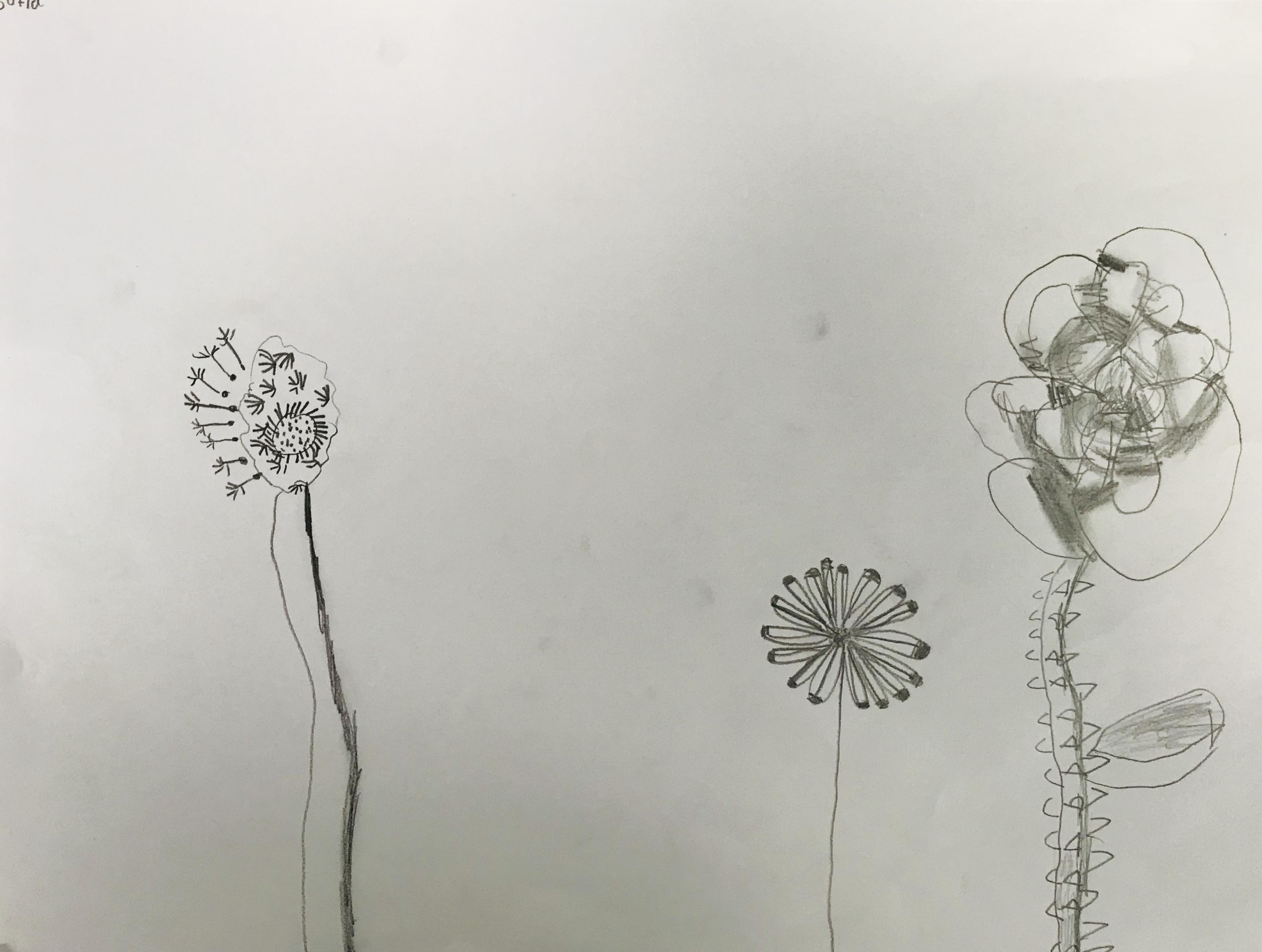 Flowerssofia.jpeg
