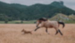 Horse chasing dog NZ