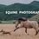 Thumbnail: Introduction to Equine Photography (FREE PDF)