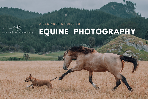 Introduction to Equine Photography (FREE PDF)