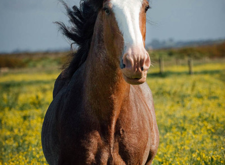 Equine Photography - How to Take Great Photos of Your Horse