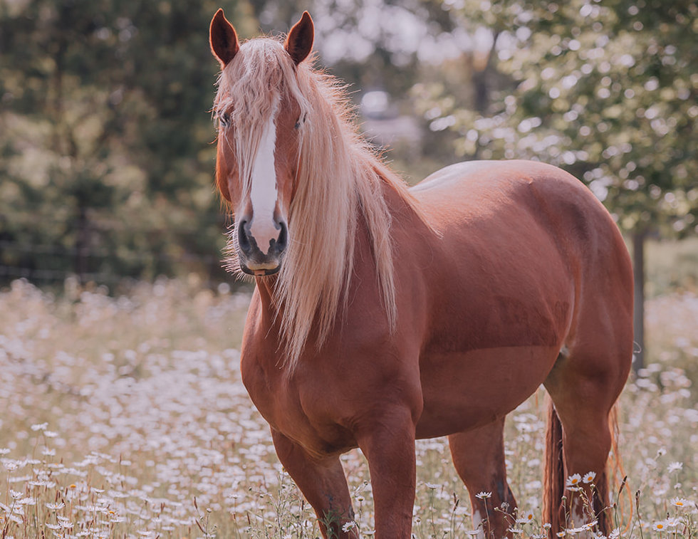 Horses-0944_websize.jpg