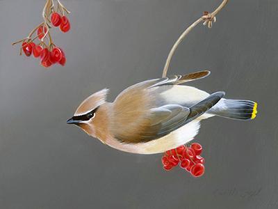 269-_Camille-Engel-Cedar-Waxwing-Bird-Painting.png