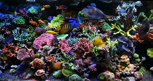 saltwater aquarium fish and coral
