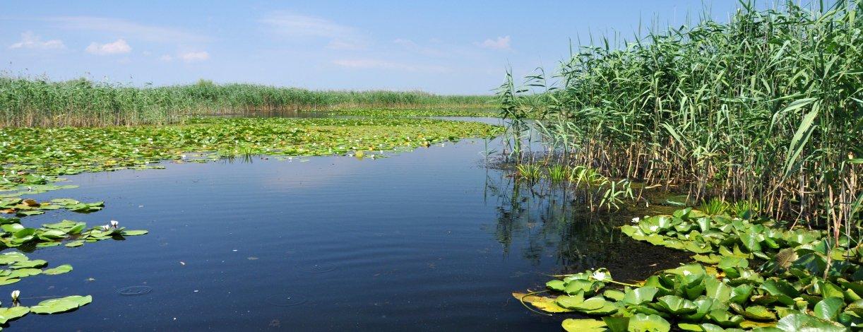 Delta do Danúbio