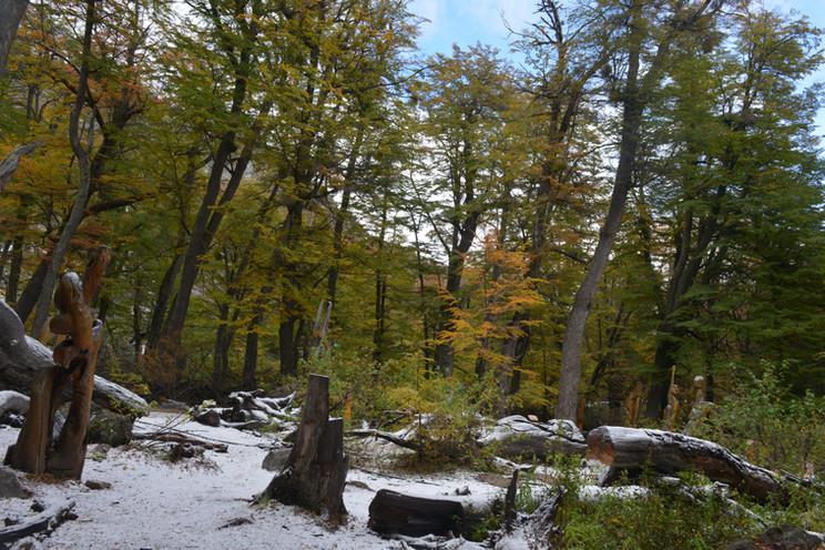 bosque tallado invierno