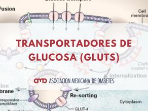 TRANSPORTADORES DE GLUCOSA (GLUTS)