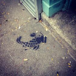 Koi Fish in the Street