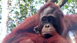 Tanjung Puting National Park, Borneo, Indonesia