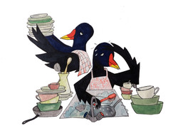 Moorhens doing dishes