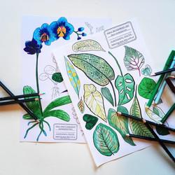 Planten uit het Plantenasiel