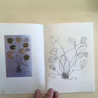 Botanisch tekenen met groep 6