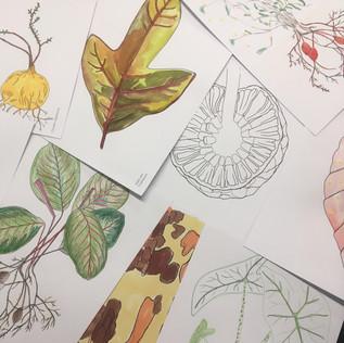 DO/DRAW botanisch tekenen met kinderen en volwassenen