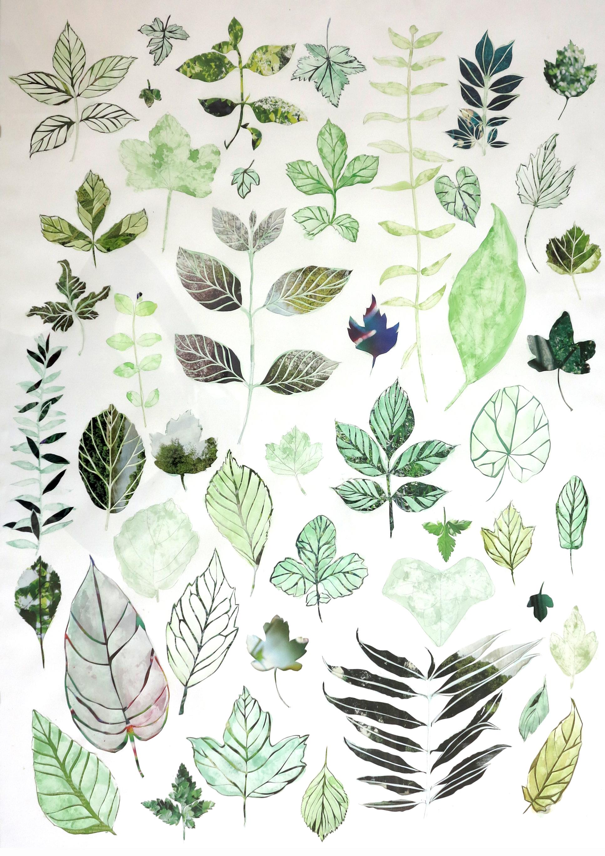 Backyard Herbarium